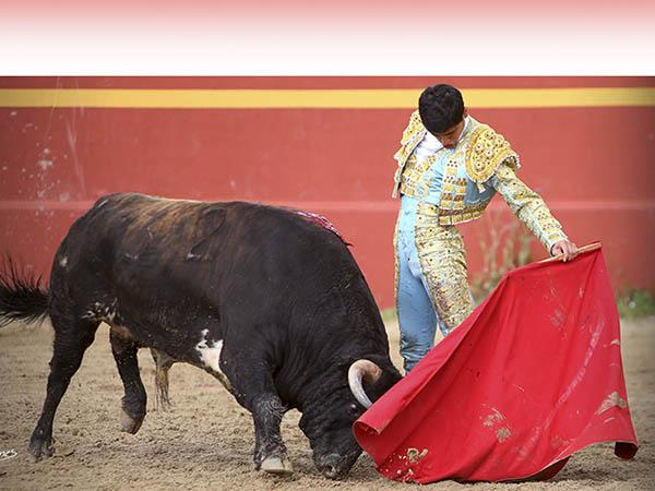 David Adame, con la mirada en Las Ventas